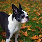 Luci in the Leaves by Karen Checca
