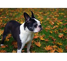 Luci in the Leaves Photographic Print