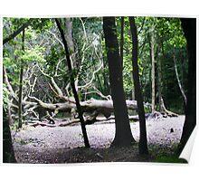 Creepy Trees Poster