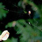 This Spider has  a vegi lunch it seems,,, by lynn carter