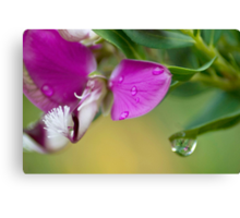 A Spring Shower Canvas Print