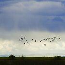 In the Prairie Rain by EchoNorth