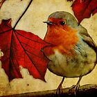 Robin red breast and red maple Leaves. by pixel8it