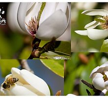 Heralding Spring by reflector