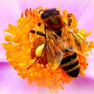 Bee on Japanese Anemone by ©The Creative  Minds