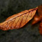 Autumn Leaf II by Chris Clark