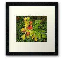 Autumn Rose Hips Framed Print