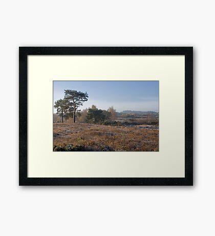 Holt Heath Framed Print