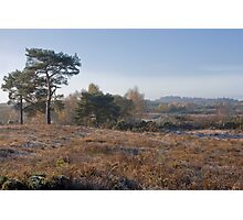 Holt Heath Photographic Print
