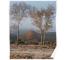 Trees company Poster