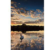 swan lake Photographic Print