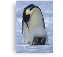 Emperor Penguin and Chick Canvas Print