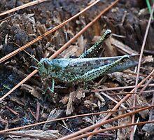 Big Grasshopper by RBuey