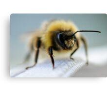Macro Bee Canvas Print