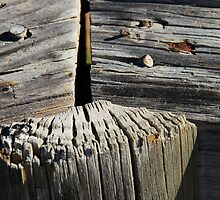 Beach Wood III by gcdepiazzi