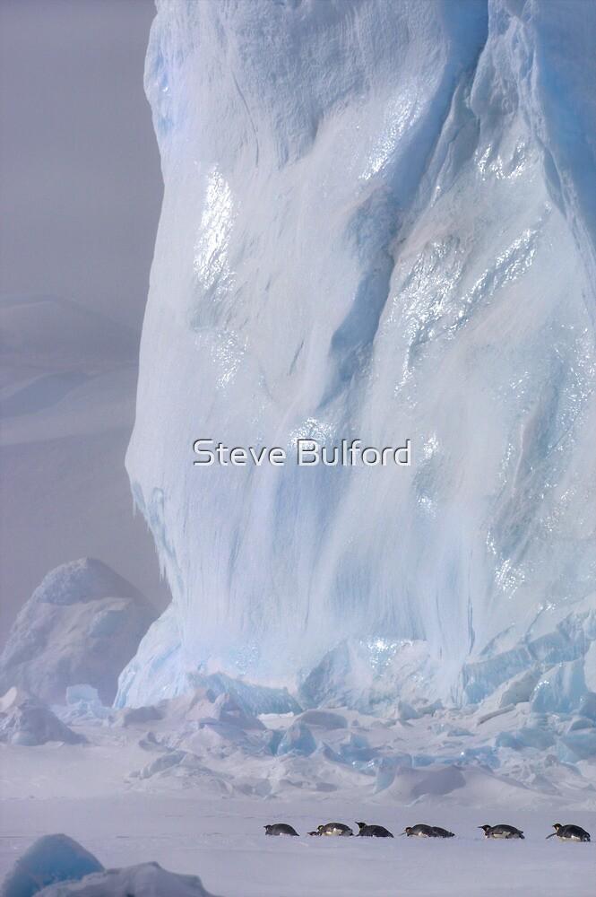 Emperor Penguins & Iceberg by Steve Bulford