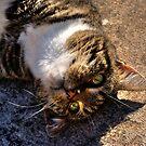 Upside-down Cat by sedge808