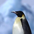 Snow Hill Penguin by Steve Bulford