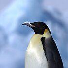 Snow Hill Penguin by Steve Bulford