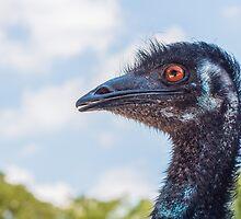Emu Smirk by Sherry V. Smith Fine Art Photography