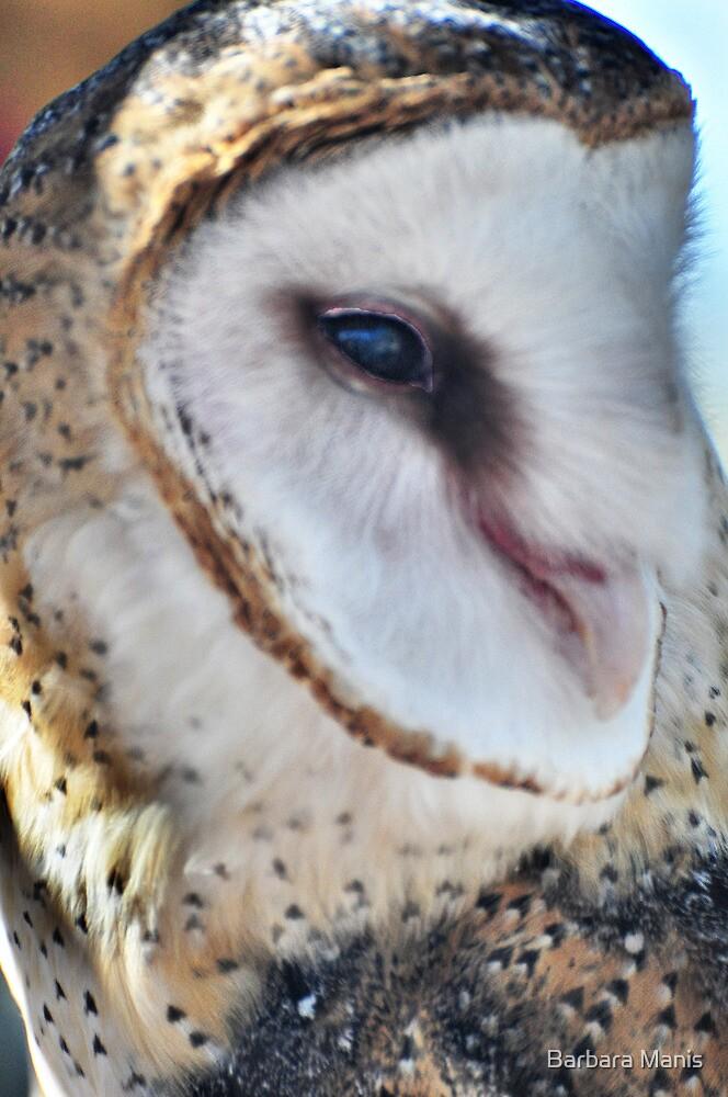Common Barn Owl by Barbara Manis