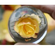 Yellow Rose In Crystal Ball Photographic Print