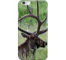 Bull Elk iPhone Case/Skin