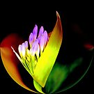 LIGHT...COLOR....A FLOWER IS BORN by Esperanza Gallego