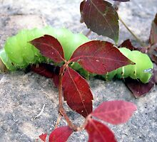 Neon Caterpillar by DreamBigInk1