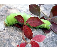 Neon Caterpillar Photographic Print