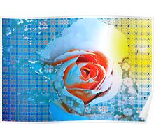 Rose with apricot center Poster
