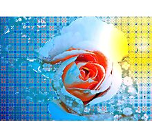 Rose with apricot center Photographic Print