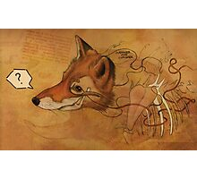 Curious Mr.Fox Photographic Print