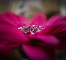 Engagement Ring by Laura Sanders