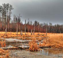 Elk Island marshlands (HDR) by zumi