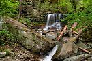 Spring Finally Arrives at B. Reynolds Falls by Gene Walls