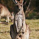 Kangaroo & Joey by Jason Scott