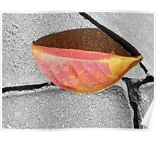 A Single Fallen Leaf Poster