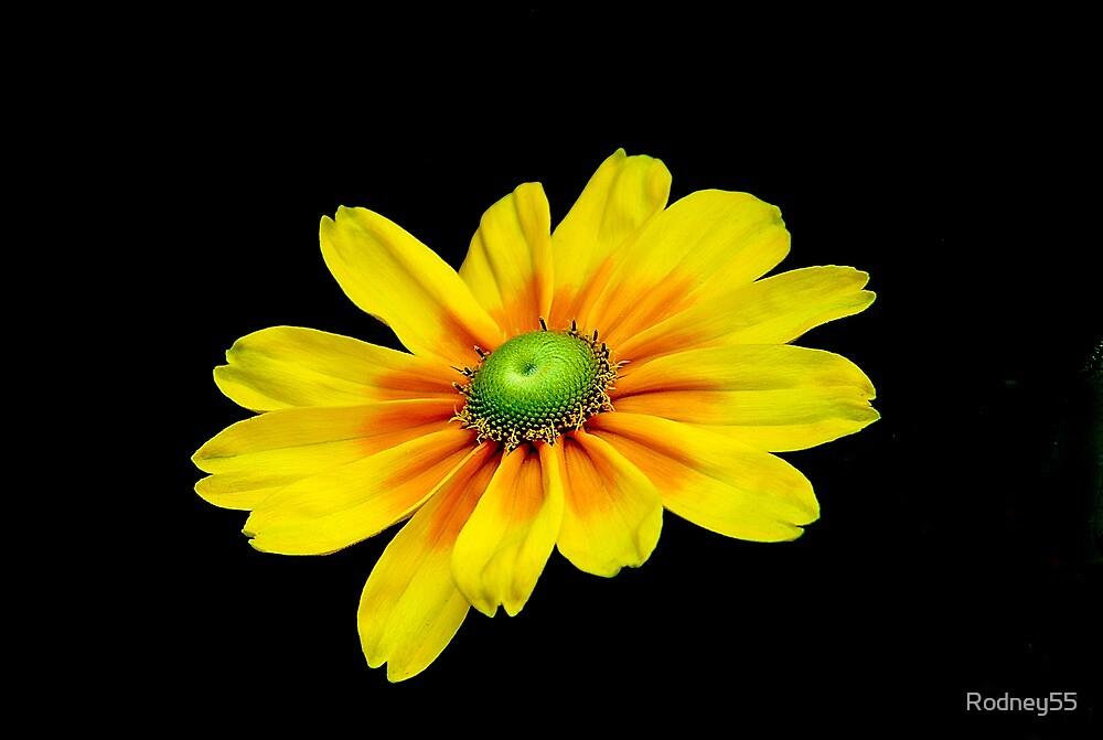 Yellow beauty by Rodney55