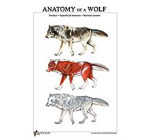 Anatomy of a Wolf Photographic Print
