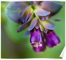 Purple Bells, South Hobart, TAS Poster
