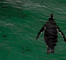 Penguin by Jack Steel