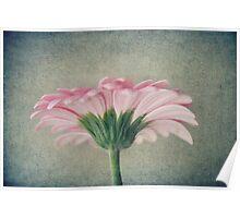 Flat Pink Gerbera Textured Poster