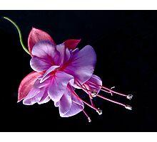 Fuchsia - Heidi Ann Photographic Print