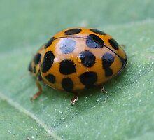 Ladybird by Daphne Gonzalvez
