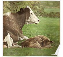 cow and calf in field Poster