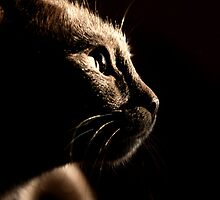 cat by huto