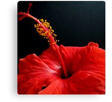 Tropical Flirt~~~[Hibiscus] Canvas Print