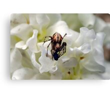 One day I saw a fly die.. Canvas Print