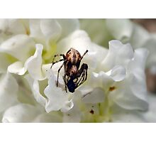 One day I saw a fly die.. Photographic Print